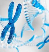 男性はいずれいなくなる・・・?男性の遺伝子が大量消失しているという「謎」
