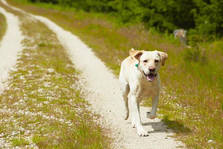Dogs accompany humans article main