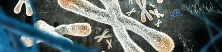 あなたは長い?短い?「細胞分裂の回数券」、テロメアの長さと寿命の関係の画像