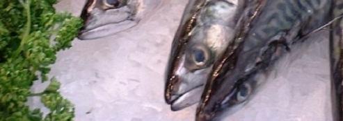お魚食べて長生きしよう!魚のビタミンDが大腸がんからの生存率を上げる?の画像