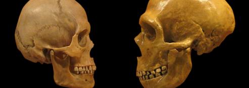 これまでの定説を覆す新発見化石のDNAが明らかにしたヨーロッパ人形成過程の画像