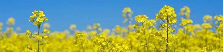 【検査結果を復習】「肺がん」の予防効果がある野菜とは?(管理栄養士による生活改善コラム)の画像