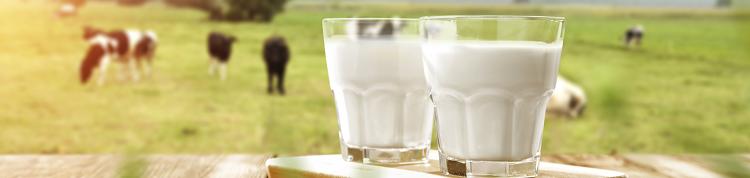 【医師によるコラム】牛乳は健康に悪いのか?の画像