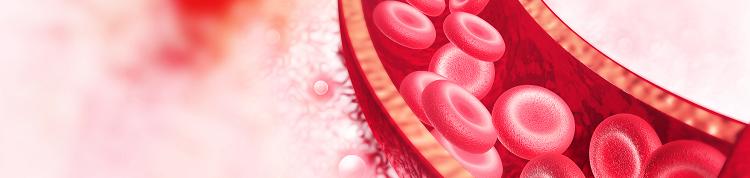【認定遺伝カウンセラーコラム】貧血の原因は赤血球の形状!?重症化することもある貧血「サラセミア」について知ろうの画像